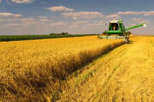 tractor cutting wheat